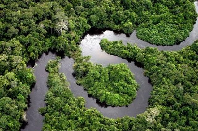 Rừng Amazon là rừng nhiệt đới lớn nhất thế giới