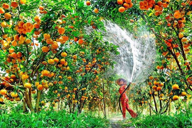 """Tiền Giang nổi tiếng là """"Vương quốc trái cây"""""""
