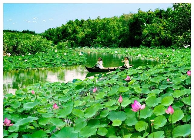 Người ta biết đến Đồng Tháp qua hình ảnh những vườn sen hồng rộng mênh mông