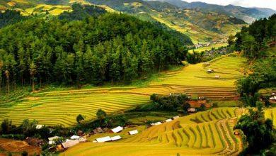 Photo of Tìm hiểu về các khu bảo tồn thiên nhiên ở Việt Nam
