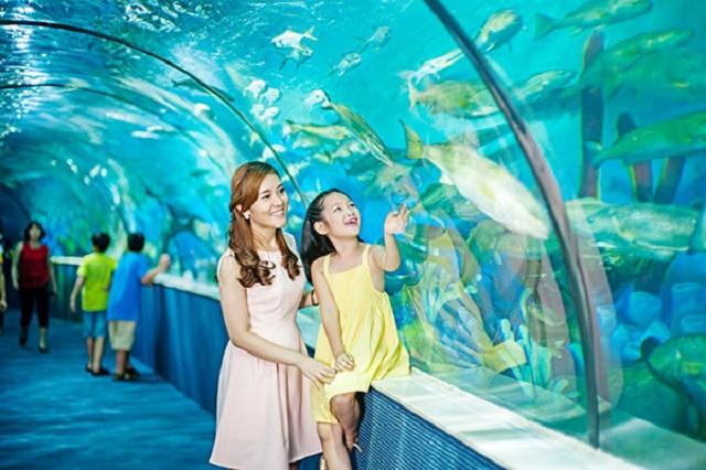 Thủy cung là nơi để các bé thỏa sức khám phá về thế giới đại dương bao la