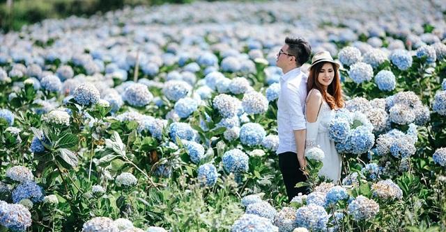 Không gian xanh bất tận tại Cánh đồng hoa Cẩm Tú Cầu