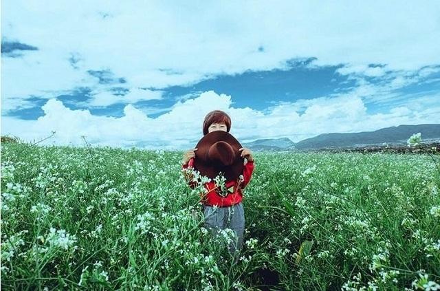 Cánh đồng hoa cải trắng luôn thu hút một lượng khách du lịch lớn đến Đà Lạt vào tháng 12