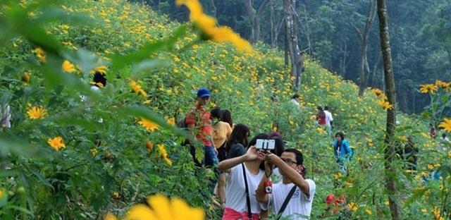 Vườn quốc gia Ba Vì ngập tràn sắc vàng vào tháng 10 mỗi năm
