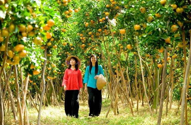 Miệt vườn trái cây tại thành phố Cần Thơ, là nơi tham quan và chụp hình của giới trẻ