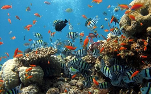 Du khách có thể nhắm nhìn những rạn san hô ở Cù Lao Chàm bằng cách lặn xuống biển