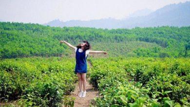 Photo of Kinh nghiệm du lịch đồi chè Đông Giang Đà Nẵng