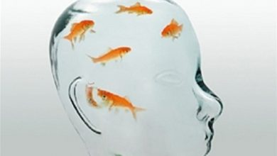 Não cá vàng là gì?