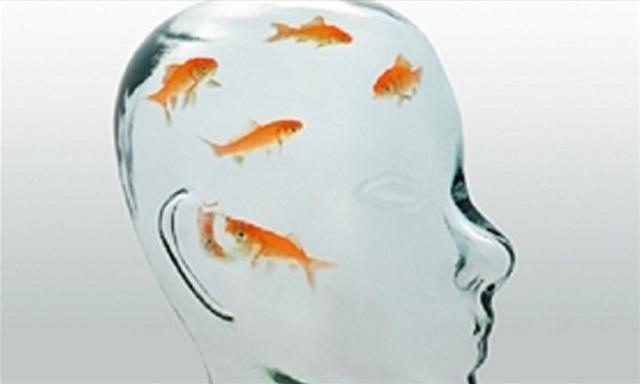 Não cá vàng là một từ dùng để ám chỉ người có trí nhớ kém