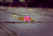 Hoa rơi cửa Phật là gì?