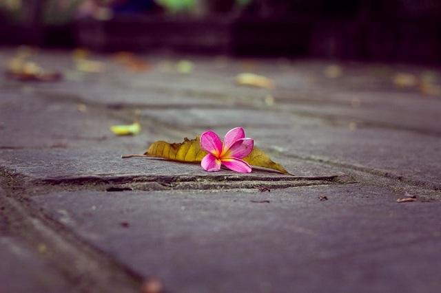 Hoa rơi cửa phật được hiểu đơn giản là người phụ nữ vì hoàn cảnh mà vào chùa đi tu