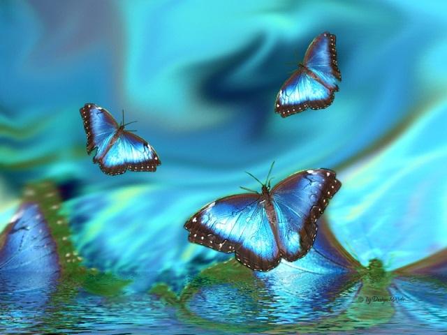 Hiệu ứng cánh bướm mang cả ý nghĩa trong khoa học và trong cuộc sống