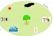 Photo of Nhân tố sinh thái là gì? Các nhân tố hữu sinh trong tự nhiên