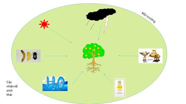 Nhân tố sinh thái là những tác động của môi trường xung quanh làm ảnh hưởng đến cuộc sống của mọi sinh vật