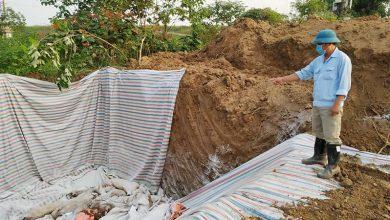 Photo of Dịch tả lợn châu Phi lan nhanh, Phú Thọ phải tiêu hủy 578 con lợn