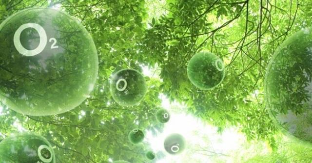 Quang hợp là quá trình hấp thụ khí CO2 và giải phóng khí O2