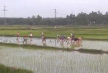 Photo of Thấy cụ ông cấy 1 mình dưới nắng, 30 nữ công nhân xắn quần xuống giúp