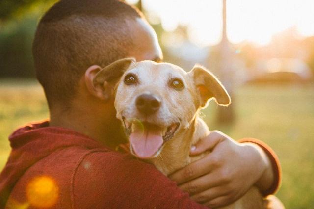 Con Sen trên Facebook để chỉ người nuôi thú cưng