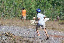 Photo of Xe tải gặp tai nạn, hàng trăm con vịt bị dân hôi của cướp mất