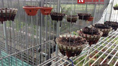 Photo of Vườn lan tiền tỷ ở Phú Thọ bị trộm sạch trong đêm, xót lòng tâm sự chủ vườn
