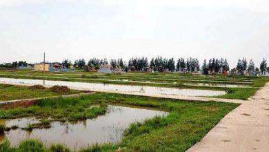 Photo of Khởi tố Chủ tịch và Phó chủ tịch xã ở Thái Bình do sai phạm về đất đai