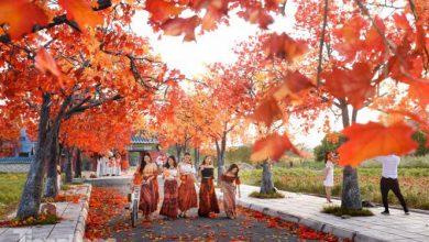 Photo of Ngỡ ngàng con đường Phong lá đỏ đẹp như Hàn Quốc ở Hà Nội