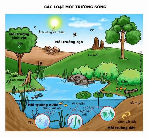 Hệ thống môi trường là khái niệm bao quát các thành phần có trong môi trường và mối liên hệ giữa chúng