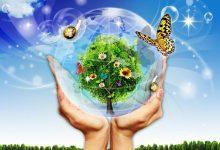 Photo of Môi trường là gì? Vai trò của hệ thống môi trường
