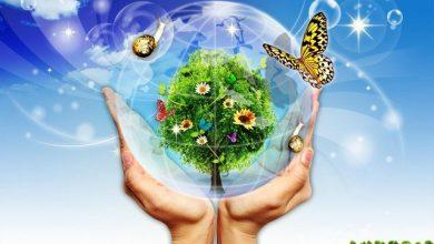 Môi trường là gì? Vai trò của hệ thống môi trường