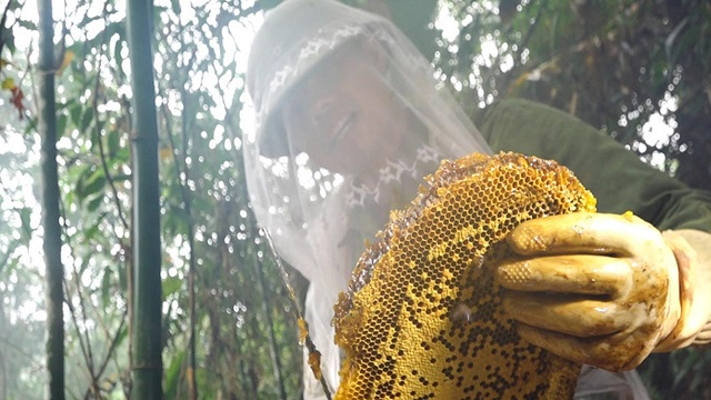 Để lấy được mật ong rừng U Minh, người dân phải đi sâu vào cánh rừng mới có được