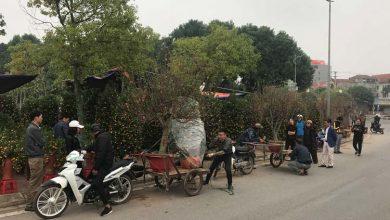 """Photo of Vĩnh Phúc: Kiếm bộn tiền từ """"ăn theo"""" nghề bán hoa tươi, cây cảnh"""
